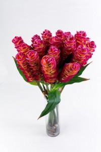 Flores y Colores #4