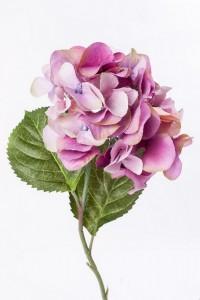 Flores y Colores #6